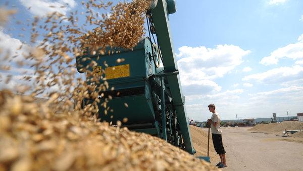 Сбор урожая на сельхозпредприятии. Архивное фото