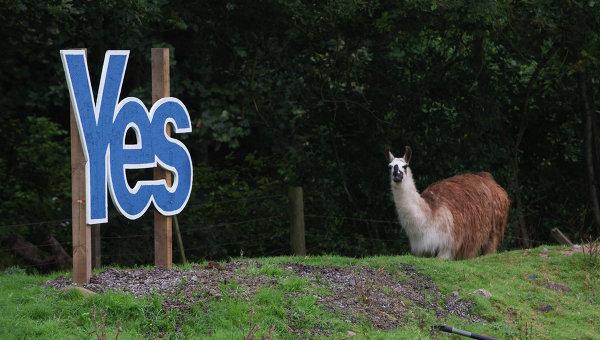 Лама стоит рядом с табличкой Да в поле на шотландской границе