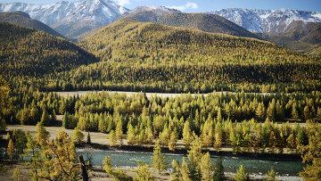 Река Чуя в Кош-Агачском районе Республики Алтай. Архивное фото