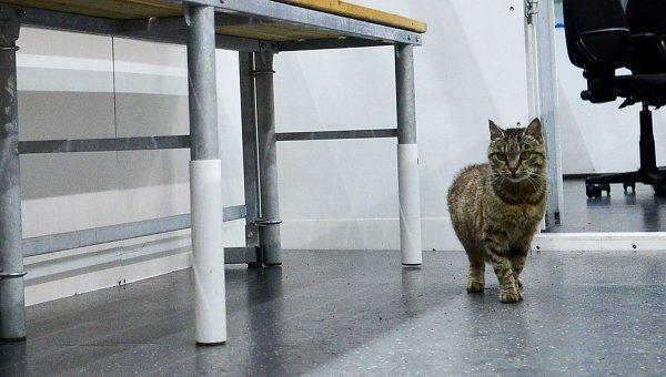 Кот из аэропорта Владивостока