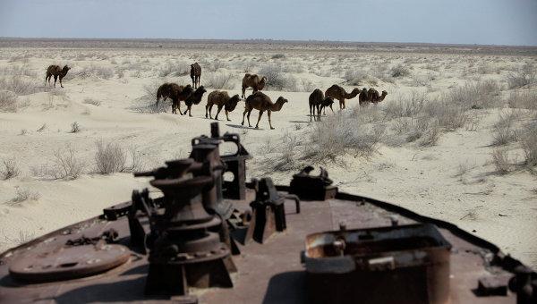 Верблюды проходят мимо кладбища кораблей на месте высохшего Аральского моря. Архивное фото