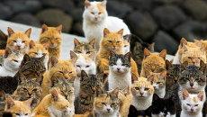 Кошки на острове Аошима, Япония