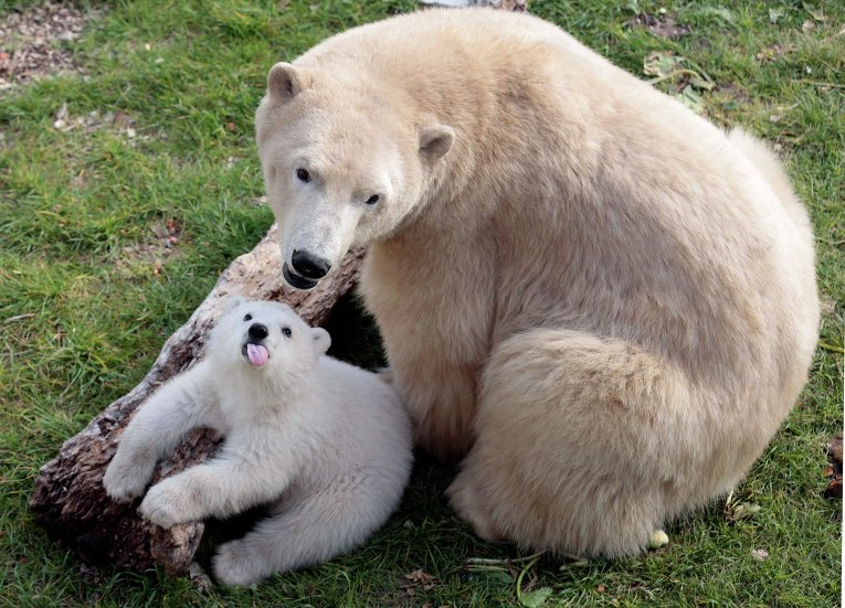 Медвежонок играет с мамой в зоопарке в Антибе