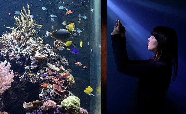 Девушка у аквариума в музее Естествознания в Лондоне (Natural History Museum)