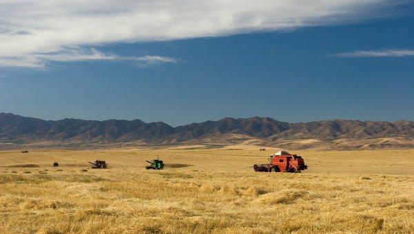 Сельскохозяйственные угодья. Архивное фото