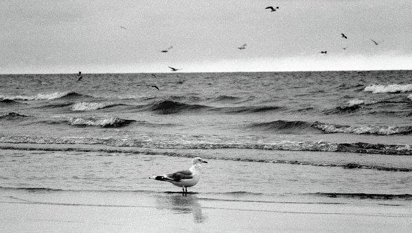 Чайка на побережье Балтийского моря