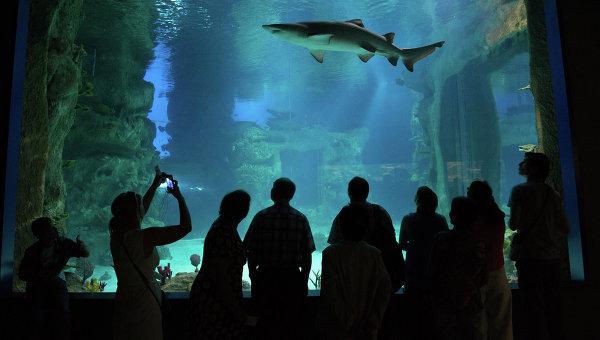 Посетители в крупнейшем в Европе центре океанографии и морской биологии Москвариум на ВДНХ