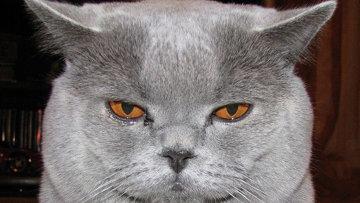 Питомец пресс-службы ростовского областного главка – кот Превентив