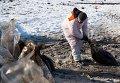 Очистка побережья после нефтяного разлива на Сахалине