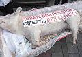 Фермеры в Киеве принесли гроб со свиньей на митинг против налоговых реформ