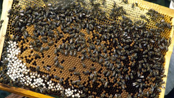 Пчеловодство - одна из отраслей хозяйства колхоза Победа на Украине
