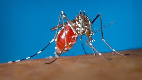 Самка комара Aedes albopictus - переносчика вируса Зика. Архивное фото