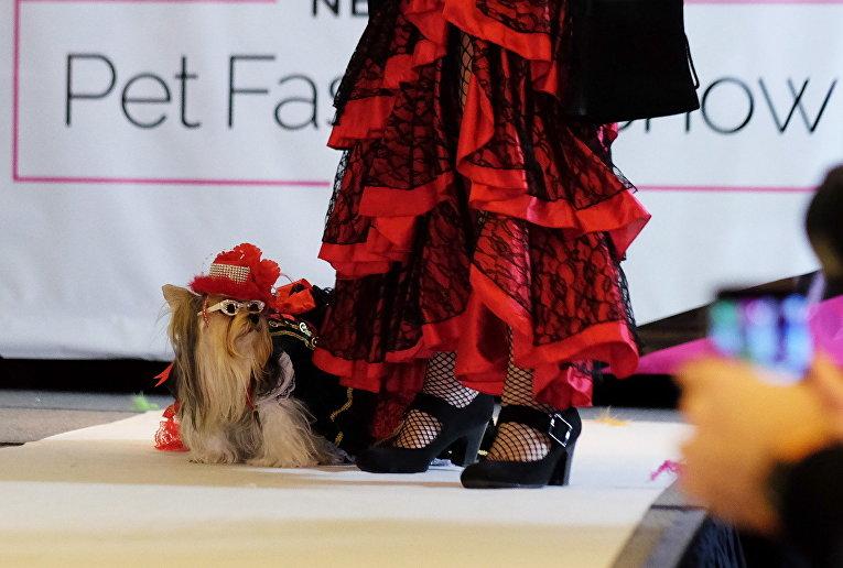 Участники модного показа для домашних животных Pet Fashion Show в Нью-Йорке, США