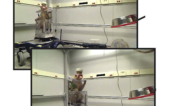 Кадры из эксперимента, предоставленные учеными