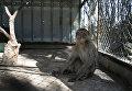 Обезьяна в зоопарке Хан-Юнис, Палестина