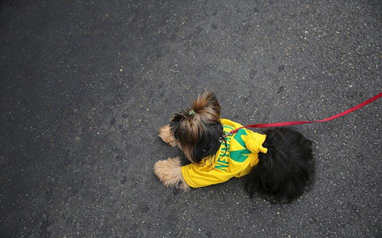 Собака в майке сборной Бразилии по футболу во время демонстрации в городе Сан-Паулу, Бразилия