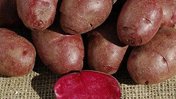 Фиолетовая картошка, созданная генетиками из университета Колорадо