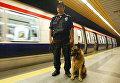 Сотрудник полиции со служебной собакой на станции метро в Стамбуле, Турция