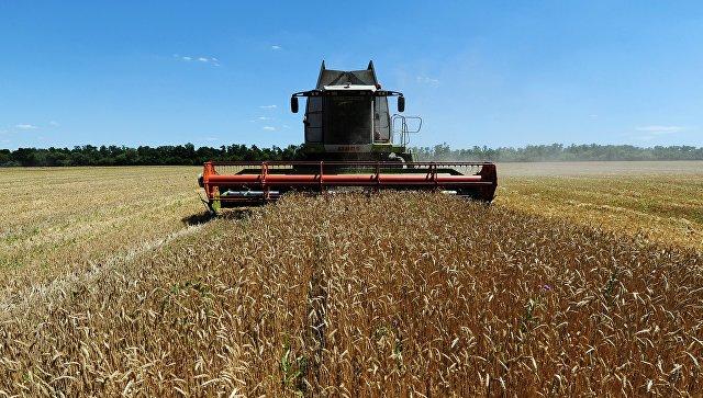 Отказ Египта от русской пшеницы неповлияет наобъемы ееэкспорта— Минсельхоз