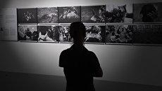 Открытие выставки победителей и призеров Международного конкурса фотожурналистики имени Андрея Стенина в Москве. Архивное фото