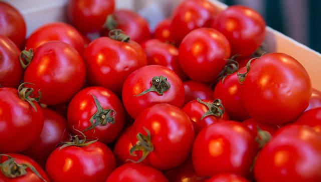Тепличный комплекс повыращиванию томатов появится вЛипецкой области