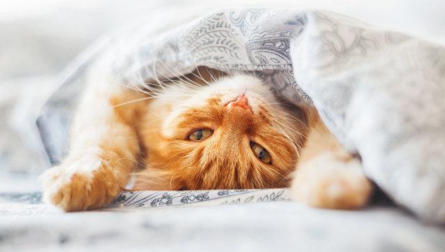 Французские ученые доказали, что лень заразна