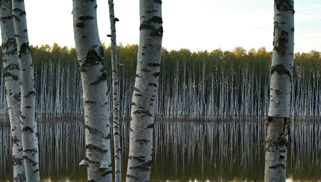 «Наш лес. Посади свое дерево» в«Сказочном»