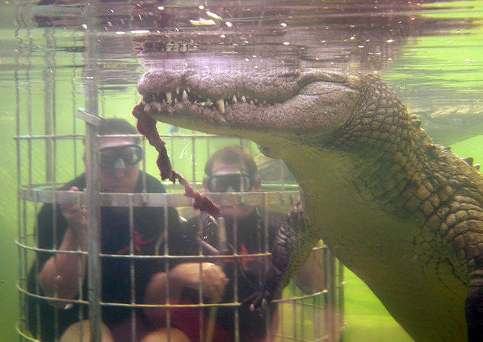 Дайвинг в клетке с крокодилами на ранчо дикой природы Канго, Южная Африка