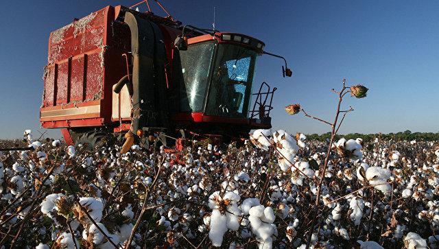 Узбекистан заключил договоры наэкспорт 550 тыс. тонн хлопка