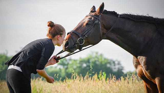 Норвежские ветеринары доказали, что лошади всостоянии общаться слюдьми