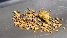 Золото, добытое на участке золотодобычи предприятия Нергеопром в Нерчинском районе Забайкальского края
