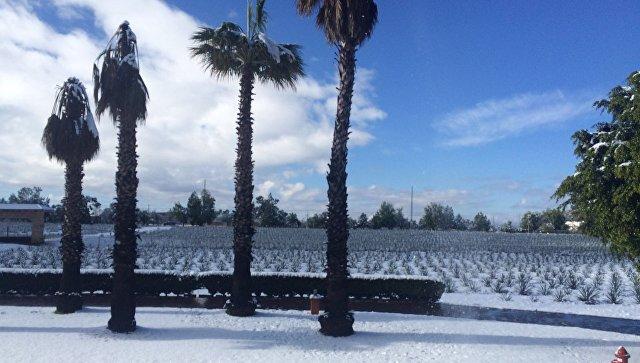 Плантации агавы для производства текилы в Мексике пострадали от снега