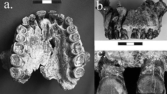 Ученые утверждают, что люди были правшами 1,8 млн лет назад