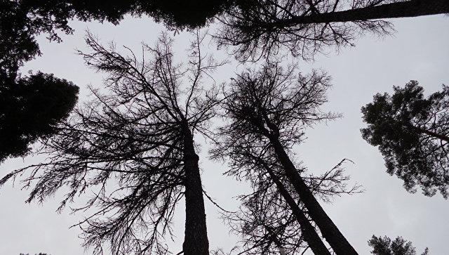 Ввоздухе Финляндии иЭстонии зафиксирован повышенный уровень радиации