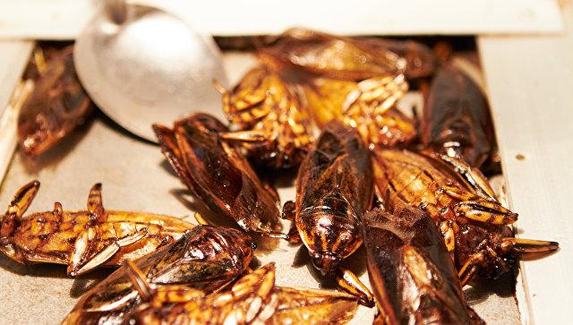 ВЯпонии закрыли завод из-за обнаруженного врыбных консервах таракана