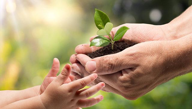 Мужчина передает растение ребенку