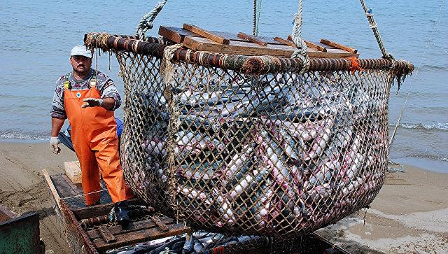 Минсельхоз РФ разработает предложения оразвитии рыбоводства