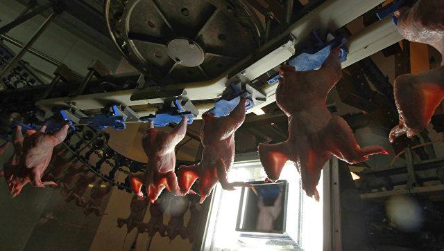 В КНР выявлен третий занеделю случай заражения птичьим гриппом