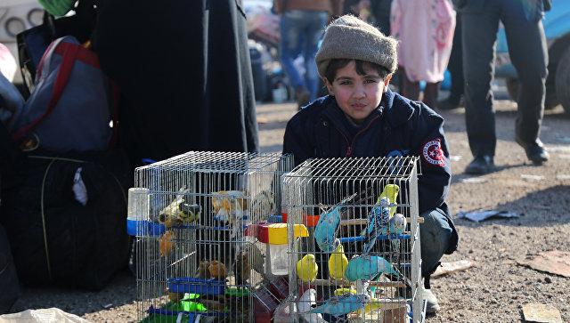 Сирийский мальчик, эвакуированный из Алеппо, сидит рядом с клетками с попугаями
