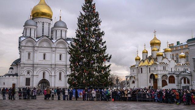 Изсемян шишек основной новогодней елки страны вырастят молодые ели