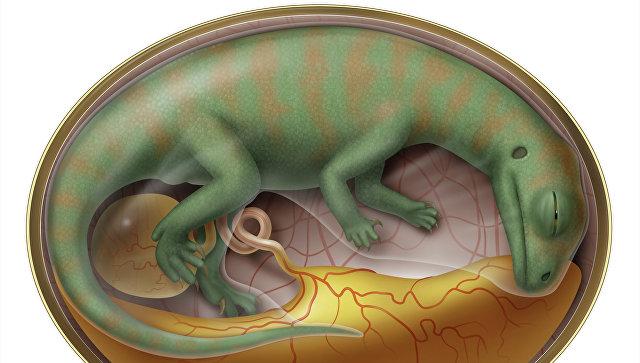 Картинки по запросу как быстро динозавры вылуплялись из яйца