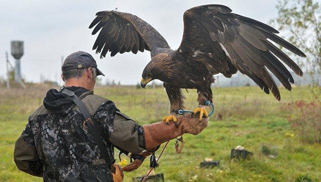 Питомник хищных птиц в заповеднике Галичья Гора. Архивное фото