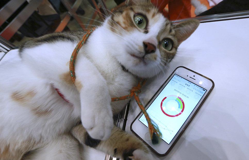 Приложение смартфона показывает состояние здоровья кошки во время презентации девайса Anicall для домашний животных в Токио, Япония