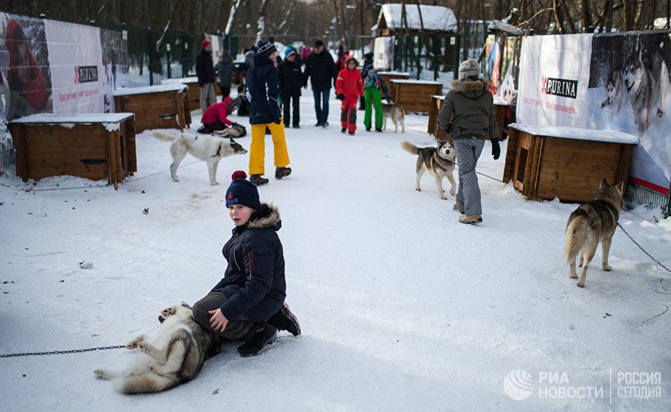 Дети на территории парка Сокольники во время знакомства с собаками породы хаски в рамках реабилитационной и образовательной программы По пути с хаски