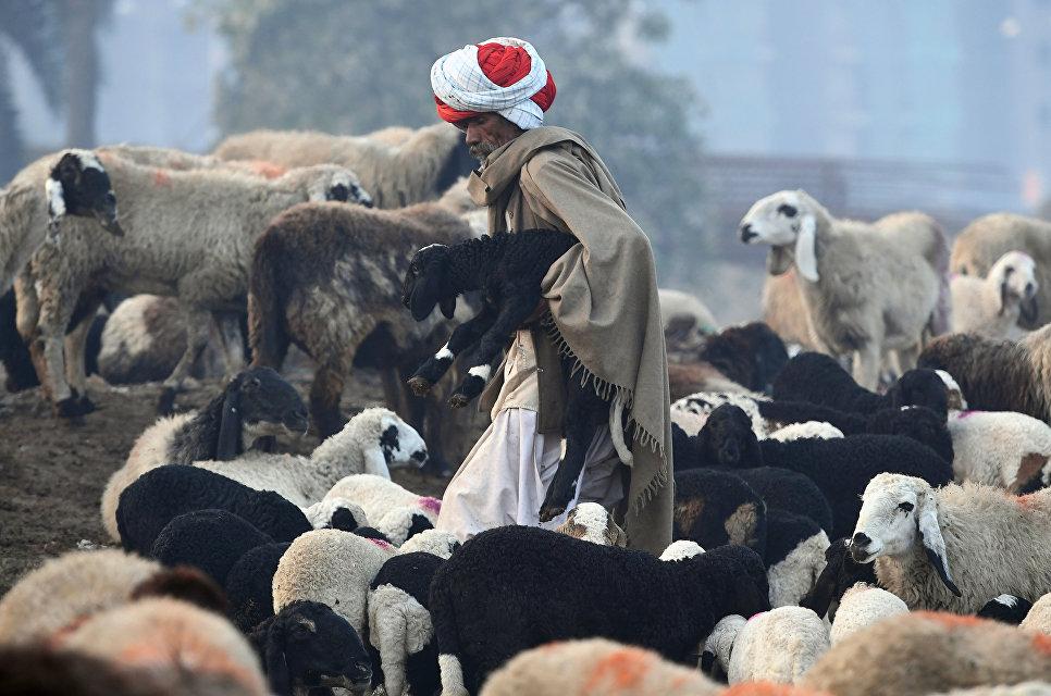 Кочевой пастух на окраине Нью-Дели, Индия