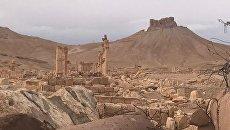 Пальмира. Архивное фото