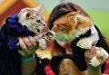 Кошки в костюмах на международной выставке Кэтсбург 2017 в Москве