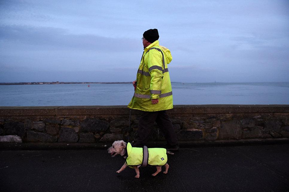 Мужчина гуляет с собакой по берегу Карлингфорд-Лоха, Ирландия