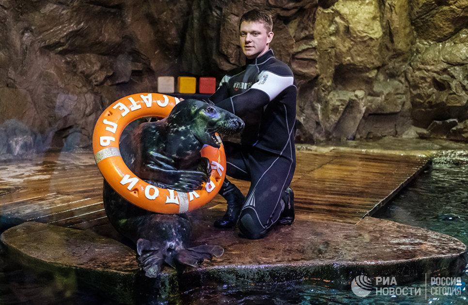 Участники представления, посвященного 10-летию тюленей в Санкт-Петербургском океанариуме
