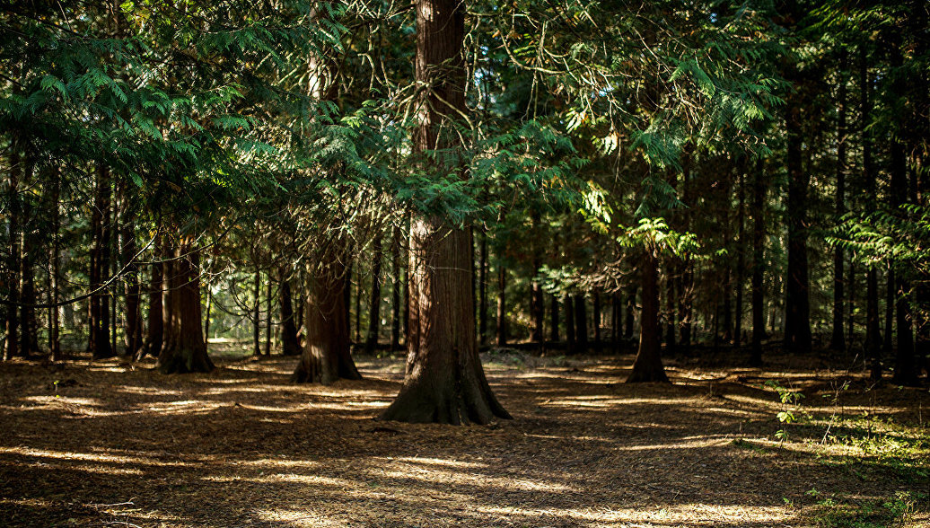 Легкие России: зачем нам нужен День леса